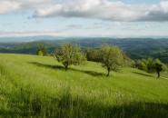 razkosna zelena pokrajina. jpg